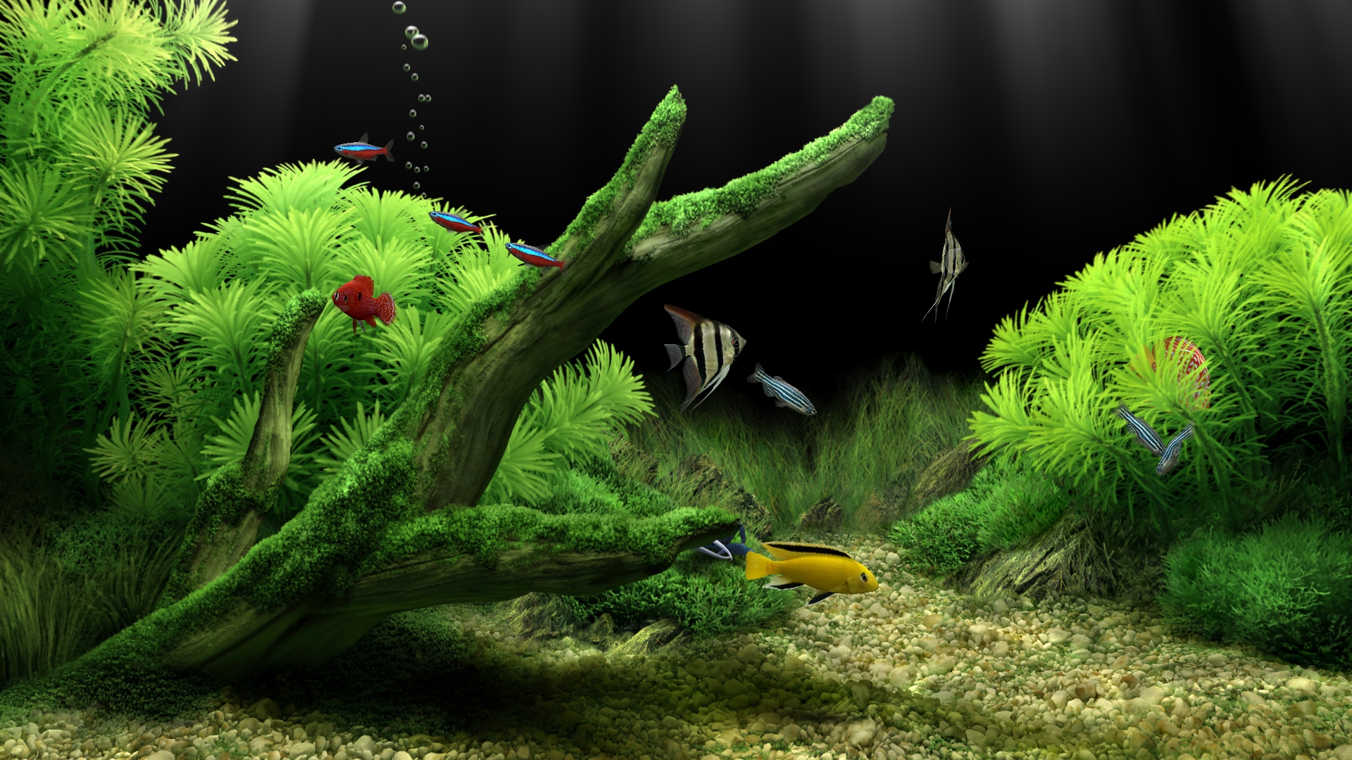 Virtual fish tank aquarium google - The Huge Size Of The Screenshots Is Intentional My Native Screen Resolution But Jpg Some Artifacts Run On A Screen 53x30 Cm