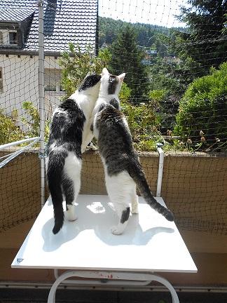 Aussichts Ideen Fur Balkon Katzen Forum