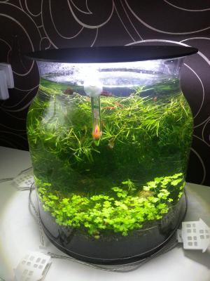 16l schnecken und garnelen vase aquarium forum. Black Bedroom Furniture Sets. Home Design Ideas
