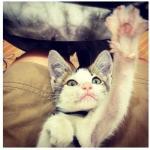instagram-new-cat---Kopie--3-.jpg