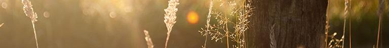 banner-sun-inner.jpg