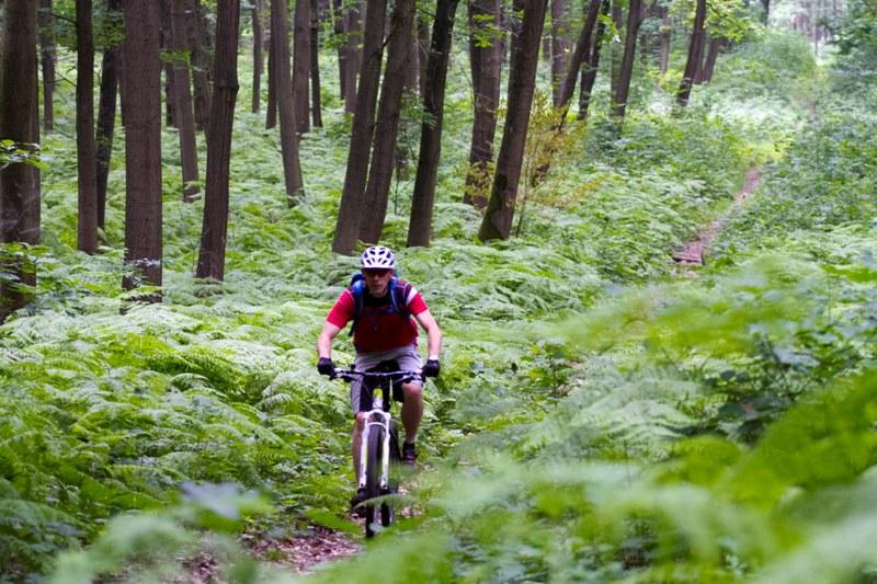 biker-im-wald_Foto-DIMB.jpg